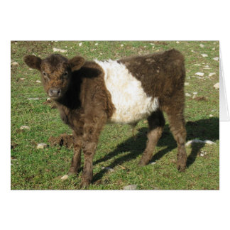 Rare Dun Belted Galloway Calf Greeting Card