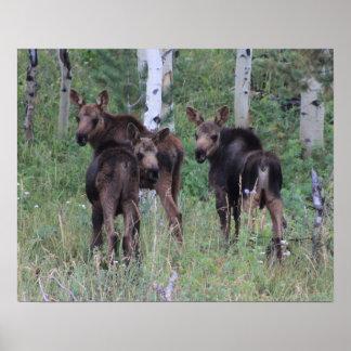Rare Moose Triplets Print
