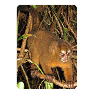 Rare Nocturnal Picture of Night Monkey 5x7 Paper Invitation Card