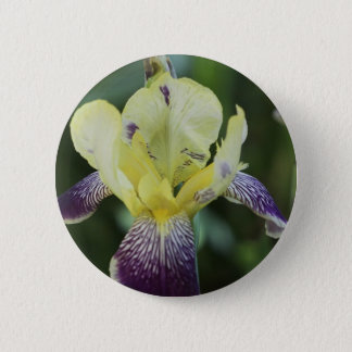 Rare Orchid Button