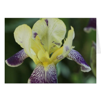 Rare Orchid Greeting Card