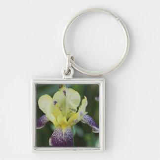 Rare Orchid Keychain