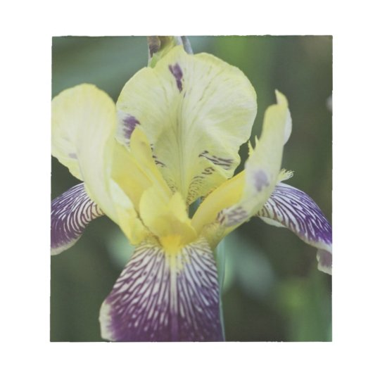 Rare Orchid Notepad