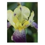 Rare Orchid Postcard