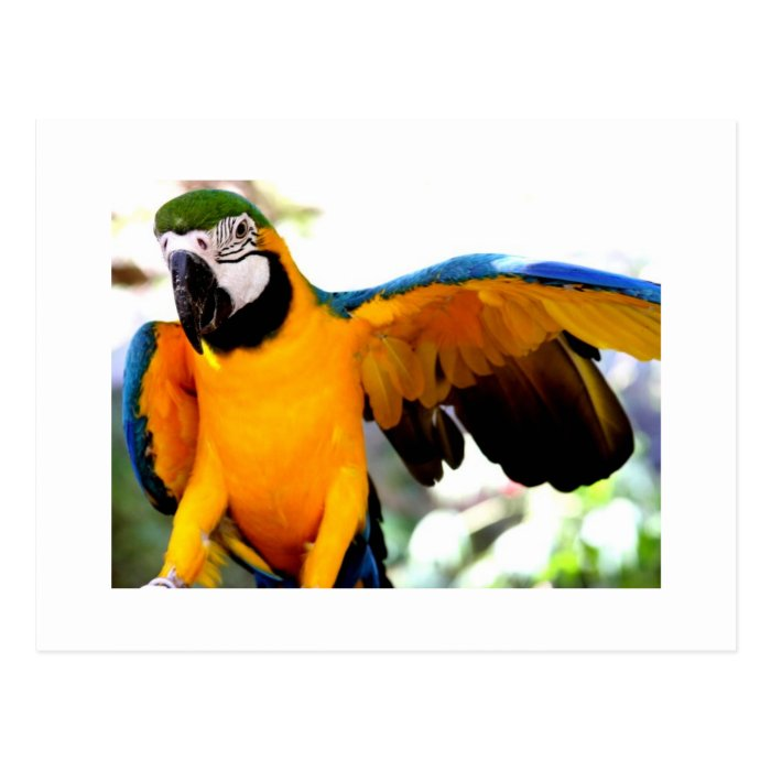 Rare Parrot Postcard