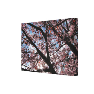 Rare Sunny Spring Day in Washington State Canvas Print