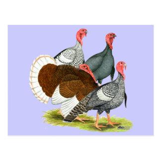 Rare Turkey Quartet Postcards