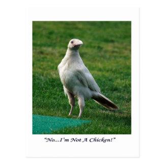 Rare White Raven Gifts Postcard