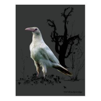 """Rare White Raven"" Gifts Postcard"