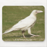 Rare White Raven Mouse Pad