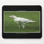 Rare White Raven Wildlife Photograph Mousepads