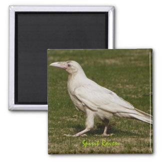 Rare White Raven Wildlife Photography Magnet