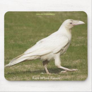 Rare White Raven Wildlife Photography Mouse Pad