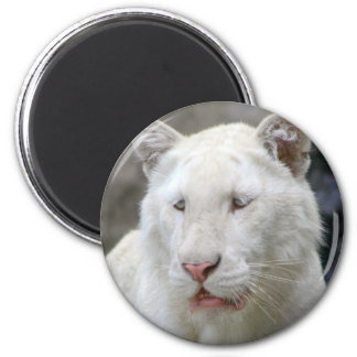 Rare White Tiger Magnet Fridge Magnet