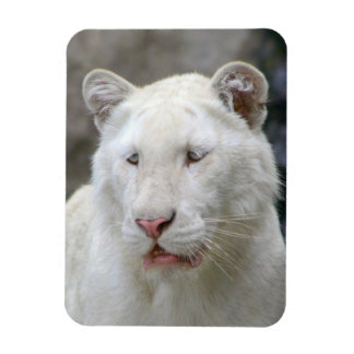 Rare White Tiger  Premium Magnet Rectangle Magnets