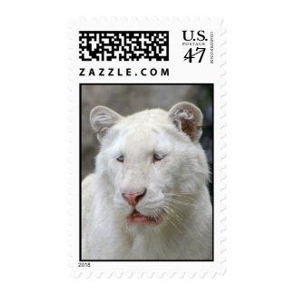 Rare White Tiger Stamp