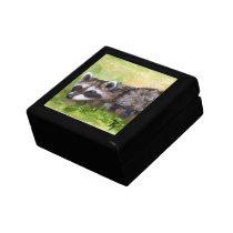 Rascal aceo Raccoon Gift Box