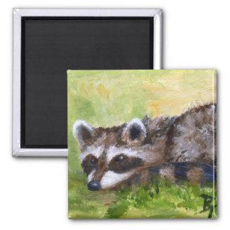 Rascal aceo Raccoon Magnet