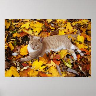 Rascal in the Leaves Print