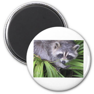 Rascal Racoon Refrigerator Magnets
