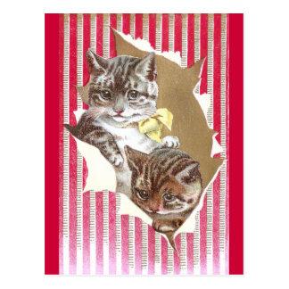 Rasgón de los gatos a través del papel de embalaje postal