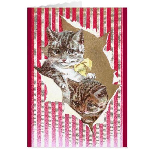 Rasgón de los gatos a través del papel de embalaje tarjeta de felicitación