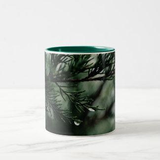 Rasgones de la taza de café del árbol de cedro