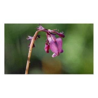 Rasgones de una tarjeta de visita de la flor del c