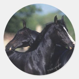 Rasguño árabe del caballo pegatinas redondas