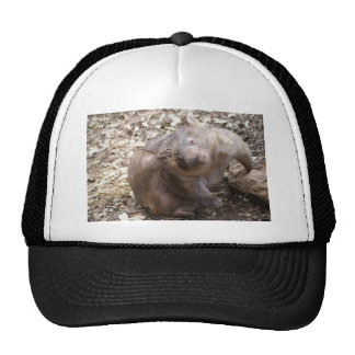Rasguño de Wombat Gorras