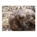 Rasguño de Wombat Postales