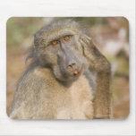 Rasguño del babuino de Chacma (ursinus del Papio) Alfombrilla De Ratones