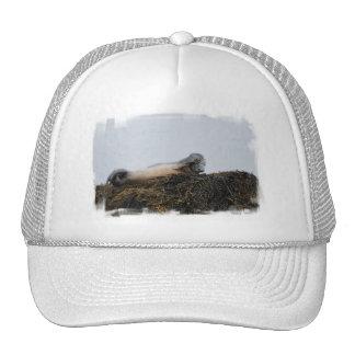 Rasguño del gorra de béisbol del sello