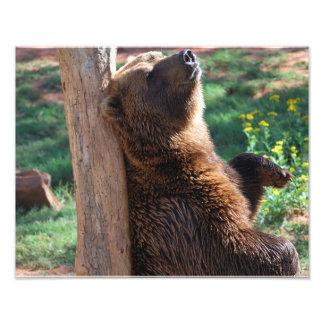 Rasguño del oso fotos