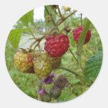 Raspberri salvaje etiquetas redondas