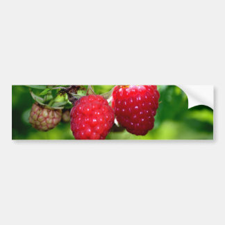Raspberries Car Bumper Sticker