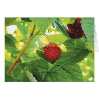 raspberries greeting cards