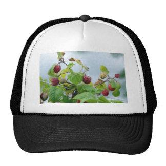 Raspberries Hat