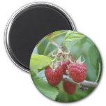 Raspberries Magnets