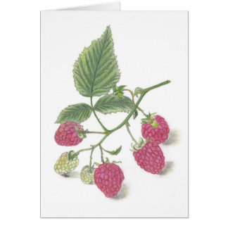 Raspberries Note Card