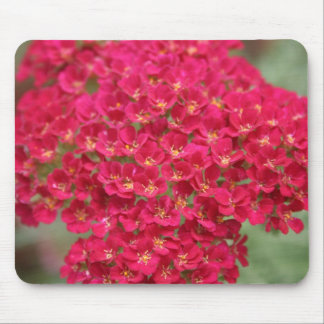 Raspberry-Colored Flowers Mouse Pad