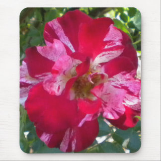 Raspberry Rose Mouse pad