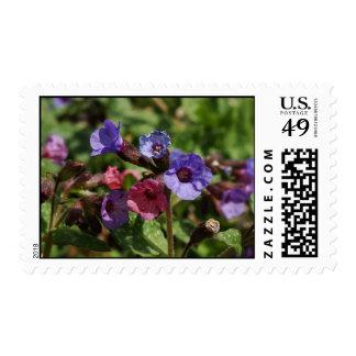 Raspberry Splash Stamp
