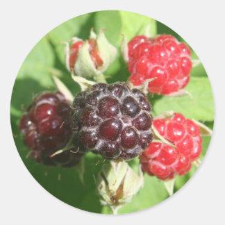 Raspberry Stickers