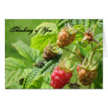 Raspberry Thinking Of You Card