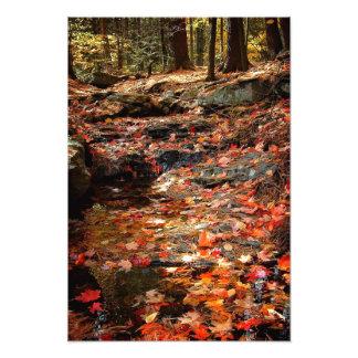 Rastro colorido del otoño en el Poconos Fotografía