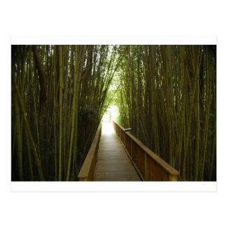 Rastro de bambú del bosque postales