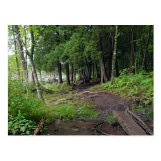 Rastro del bosque a través del parque de Jay Cooke Postal