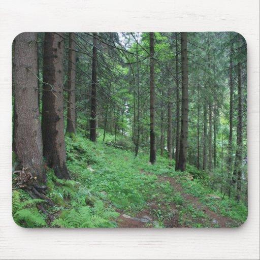 Rastro del bosque en mún Gastein Tapete De Ratón