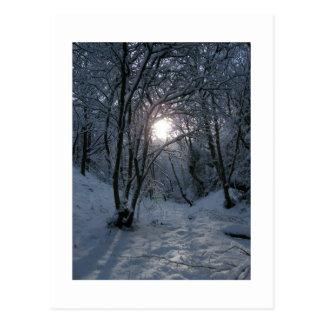Rastro del bosque Nevado Tarjetas Postales
